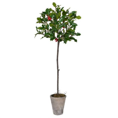 Potted Holly Tree